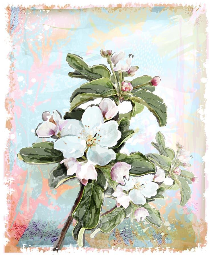 Apple flower royalty free illustration