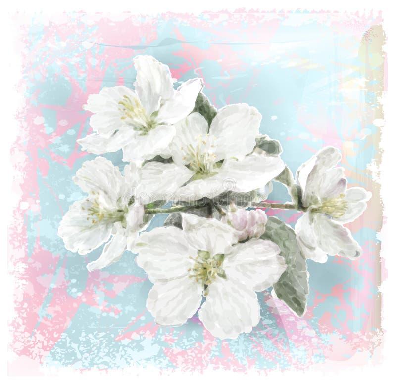 Apple flower blossoms stock illustration