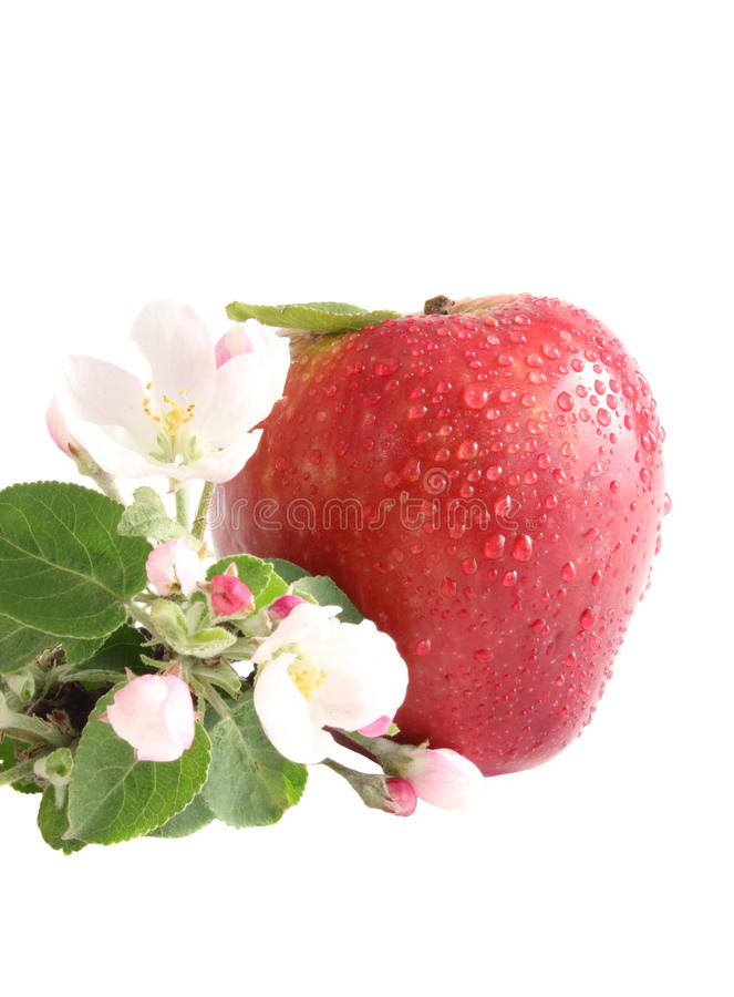 Apple and flowers royalty free stock photo
