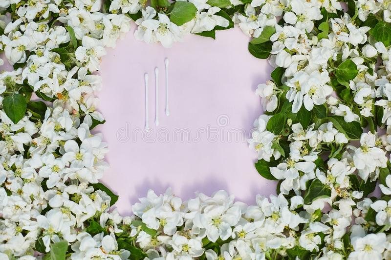 Apple flowers on pastel pink background. There is an empty space for text or logo. View from top. Gorizontal frame. Apple flowers on pastel pink background royalty free stock image