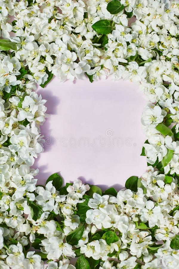 Apple flowers on pastel pink background. There is an empty space for text or logo. View from top. Vertical frame. Apple flowers on pastel pink background. There stock image