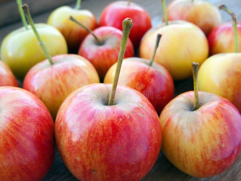 Apple-Frucht lizenzfreies stockfoto