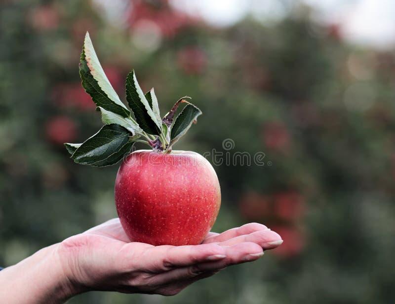 Apple, Fruit, Local Food, Produce Free Public Domain Cc0 Image