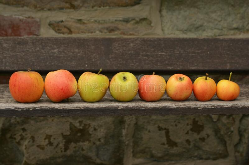8 Apple Fruit on Top of Wooden Panel royalty free stock photography
