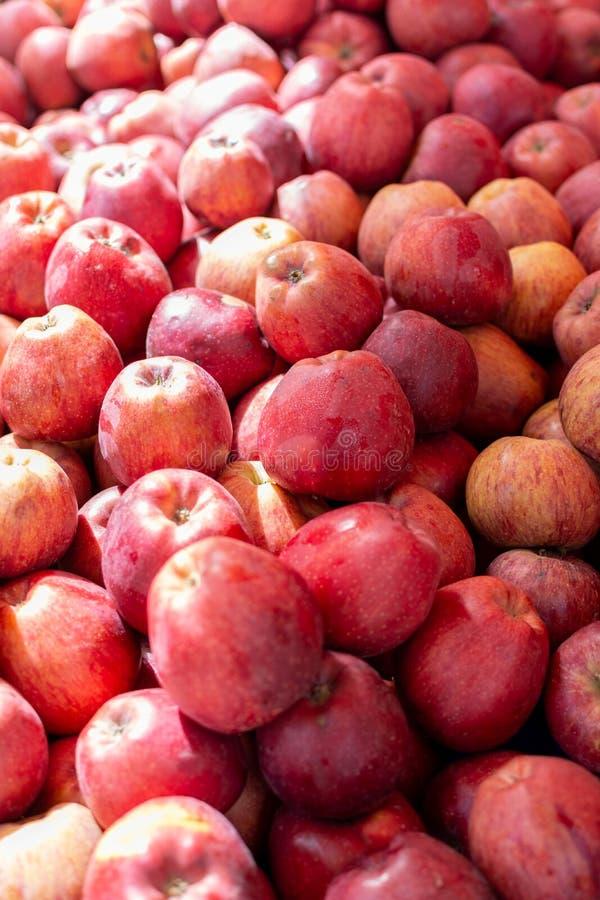 Apple fruktbakgrund, ny skörd av röda äpplen, slut upp arkivbilder