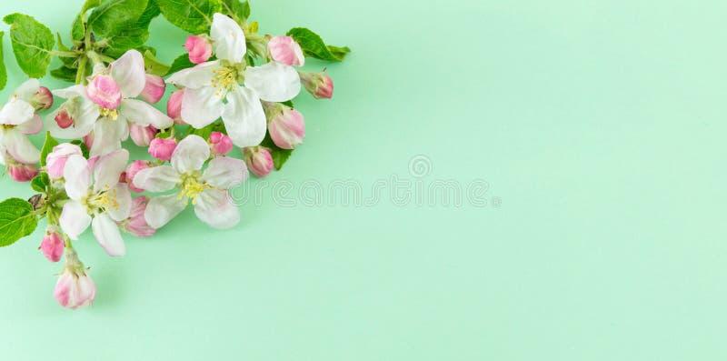 Apple frutifica flor da flor com folhas imagem de stock