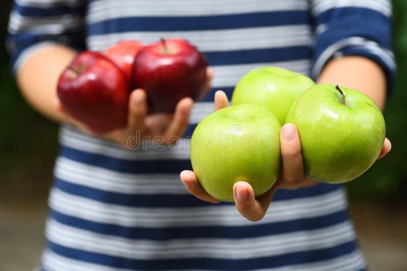 Apple frutifica guardando à mão, colheita de Apple imagens de stock