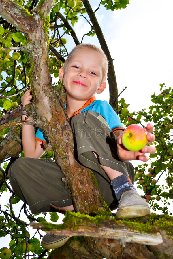 Apple garden stock image