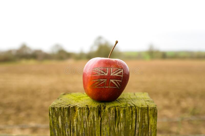 A British flag on an apple in a field. An apple with a British union jack flag on in an English field stock image