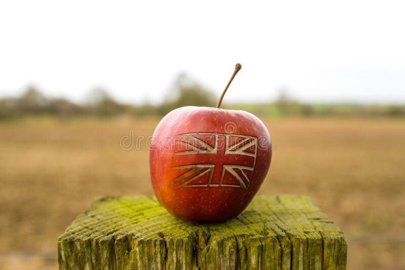 A British flag on an apple in a field. An apple with a British union jack flag on in an English field stock photos