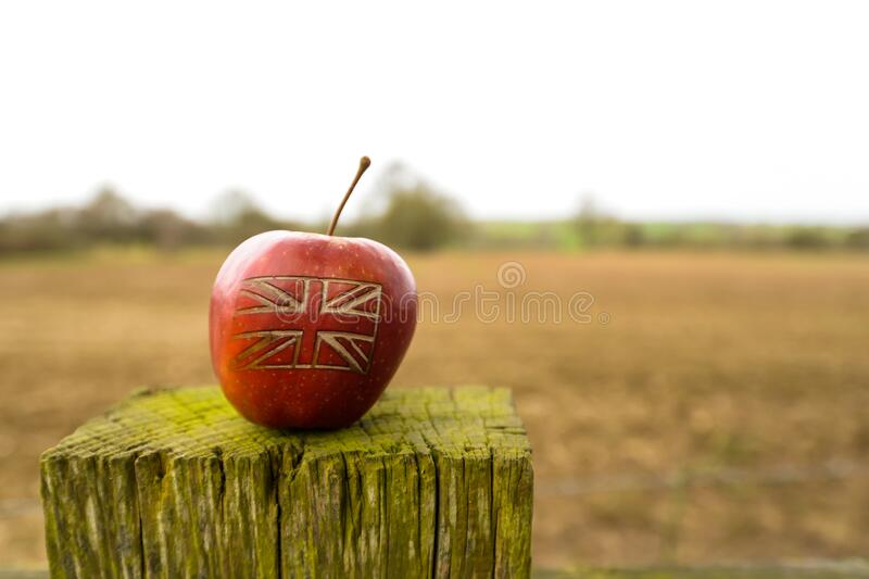 A British flag on an apple in a field. An apple with a British union jack flag on in an English field royalty free stock photo