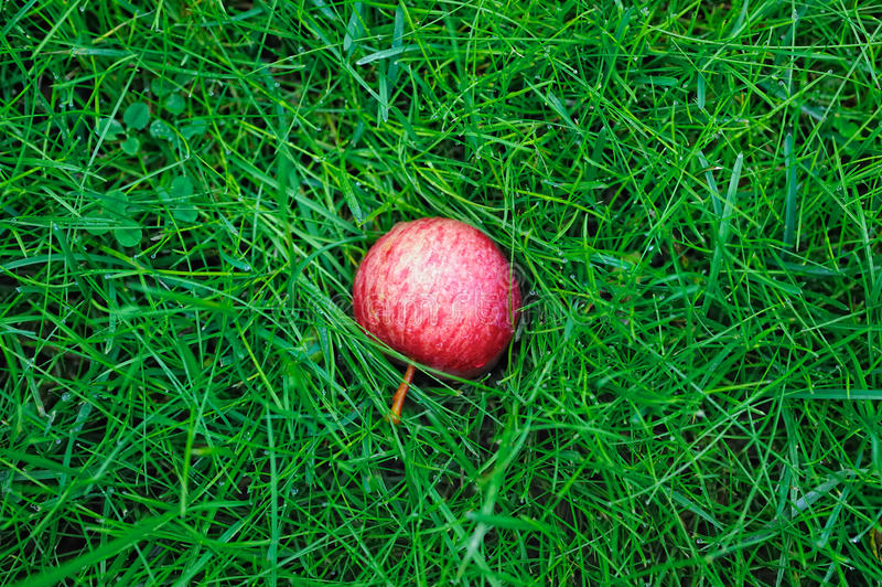Apple On Grass Royalty Free Stock Images