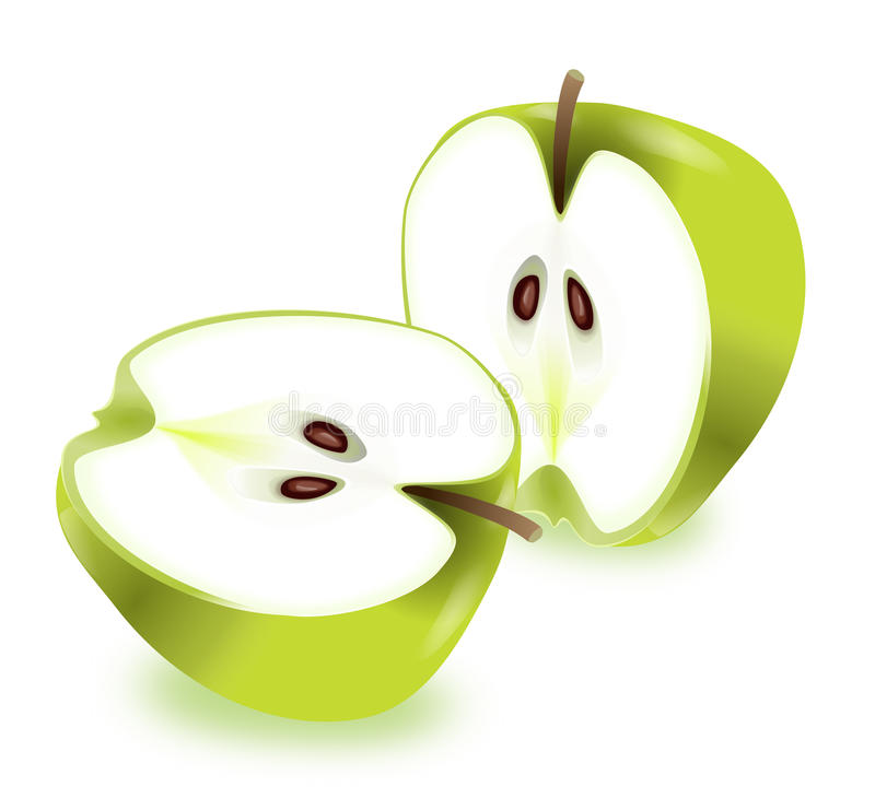 Apple halves. royalty free illustration