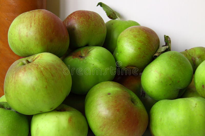 Apple Harvest. The Bramley apple (Malus Domestica Bramley's Seedling), which is the most used variety for cooking in the UK, celebrates its bicentenary in 2009 stock image