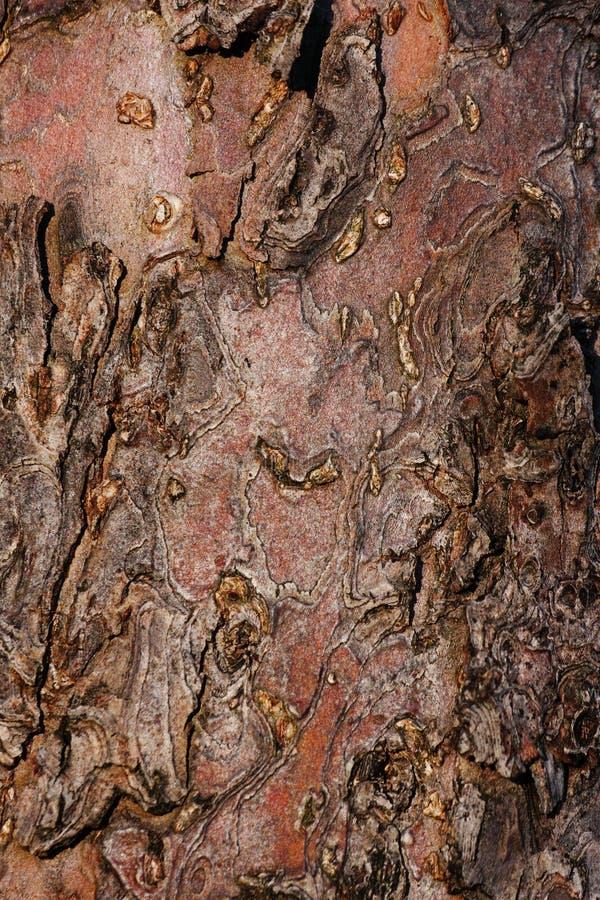 Apple-het detail van de boomschors royalty-vrije stock afbeelding