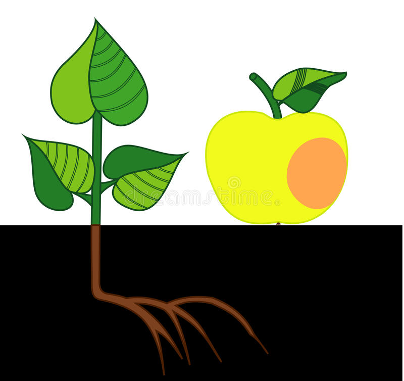 Apple and the hive. Illustration of ripe Apple and a small tree stock illustration