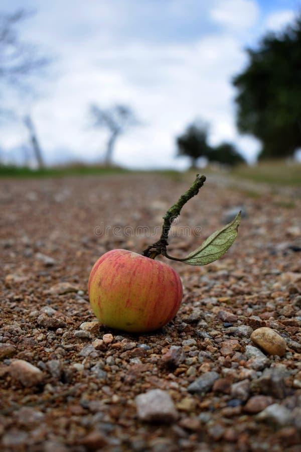 Apple i ścieżka obrazy royalty free