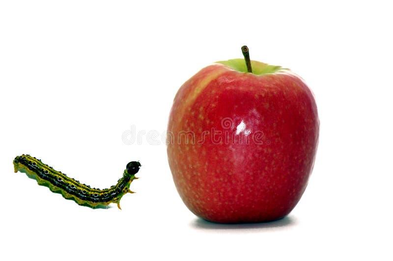 Apple i gąsienica uwalniający na białym tle fotografia stock
