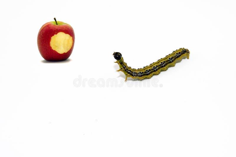 Apple i gąsienica uwalniający na białym tle zdjęcie royalty free