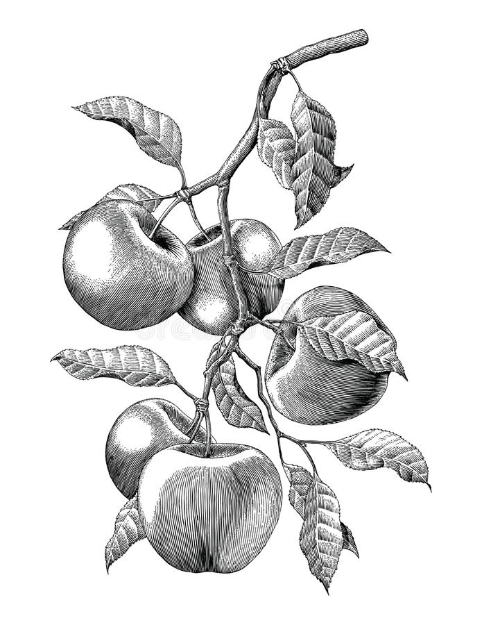 Apple-illustratie van de de tekenings isoleert de uitstekende gravure van de takhand royalty-vrije illustratie