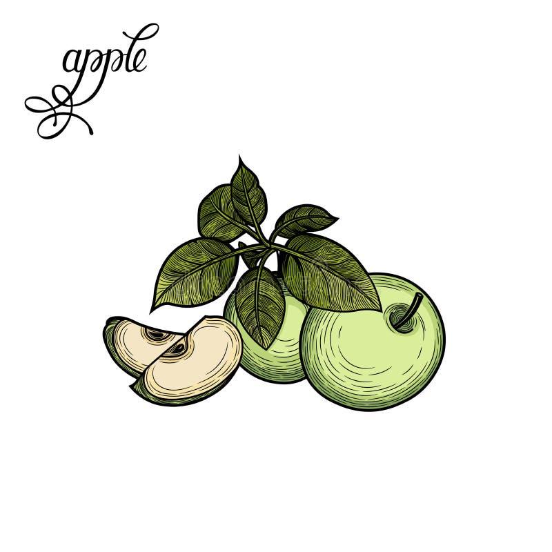 Apple Illustrazione di vettore illustrazione di stock