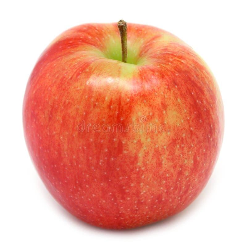apple jonagold fotografia stock