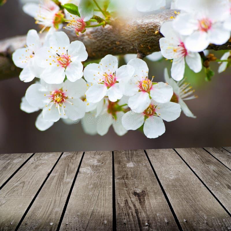 Apple kwitnie w wiośnie i pustym drewnianym pokładu stole. obrazy royalty free