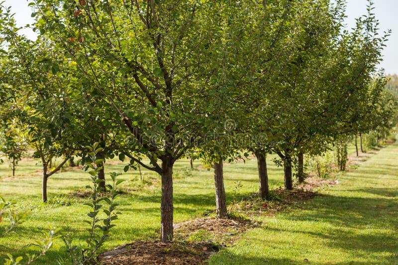 Apple lantgård arkivfoto
