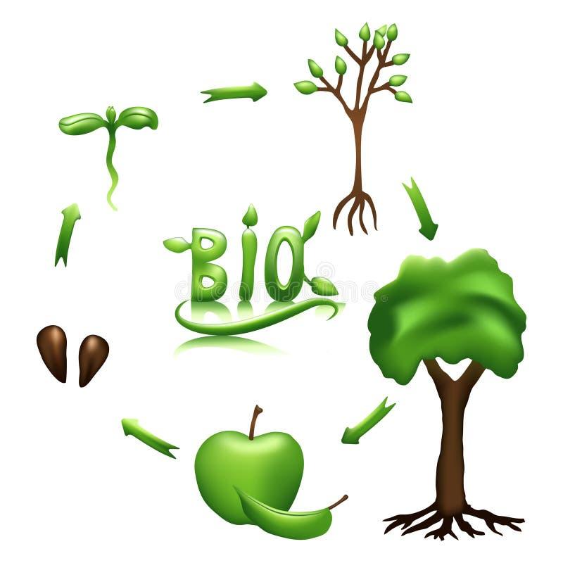 Apple-Lebenszyklus und Biozeichen stock abbildung
