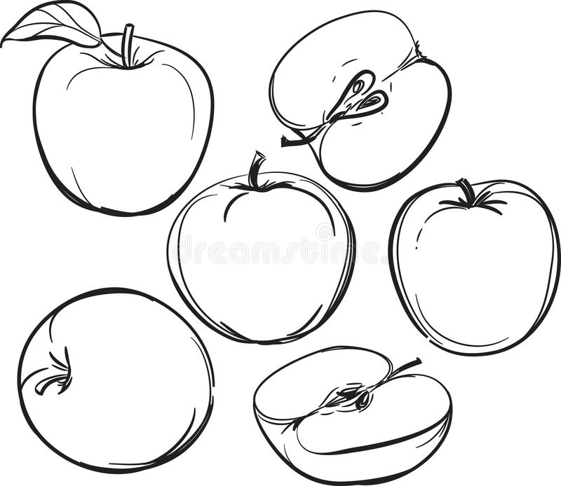 Line Drawing Apple : Apple line drawing of apples on a white background one