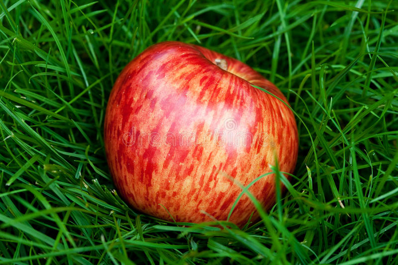 Apple Lying On Green Grass Royalty Free Stock Images