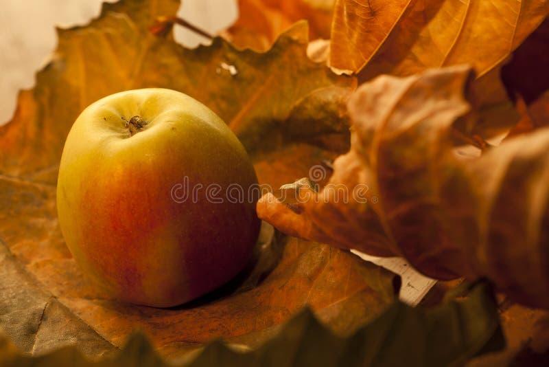 Download Apple med leaves arkivfoto. Bild av medf8ort, lövverk - 27275208