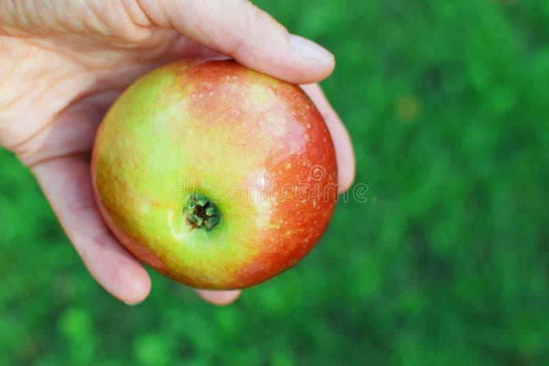 Apple in menselijke hand stock foto's