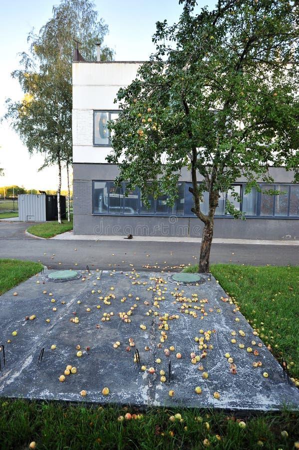 Apple met appelen en gevallen appelen stock afbeeldingen