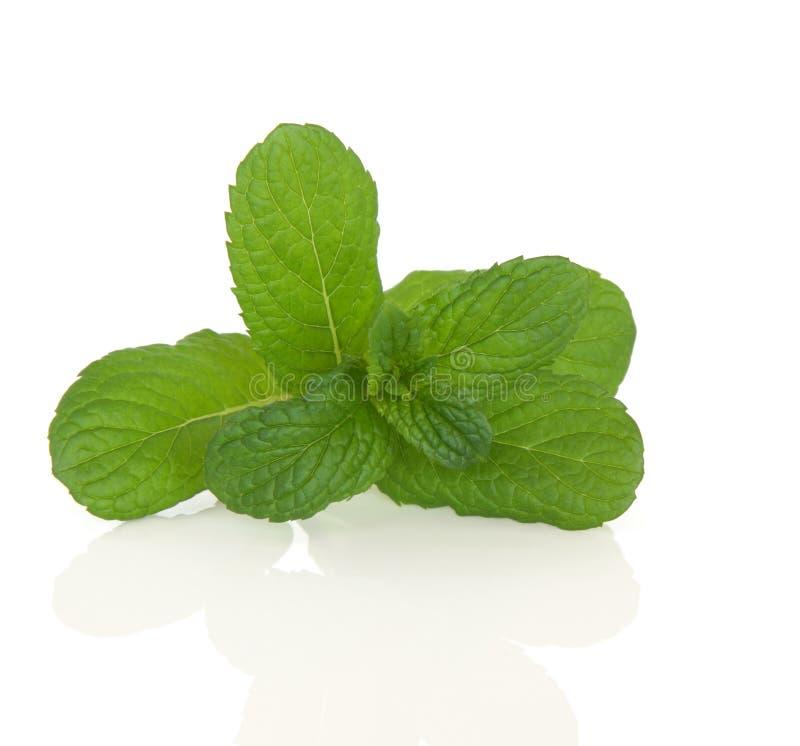 Apple Mint Herb royalty free stock photos