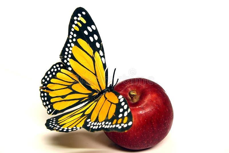 apple motyl zdjęcia royalty free