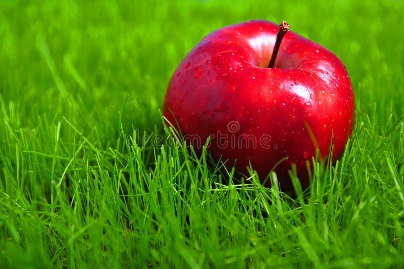 Apple na grama fotografia de stock