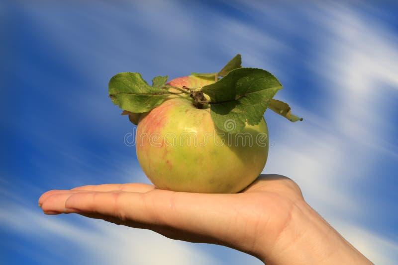 Apple na palma imagem de stock