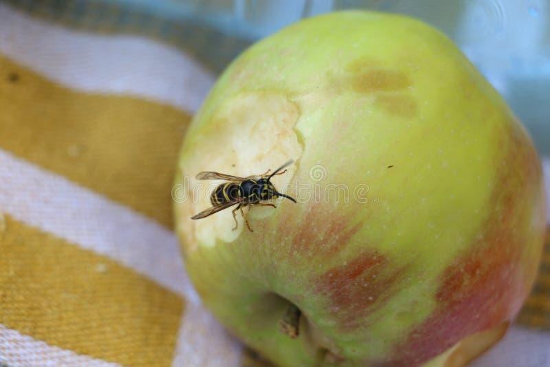 Apple nektar royaltyfria bilder