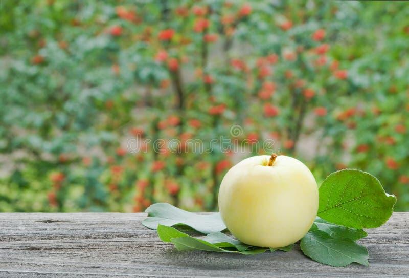 Apple nel giardino fotografie stock