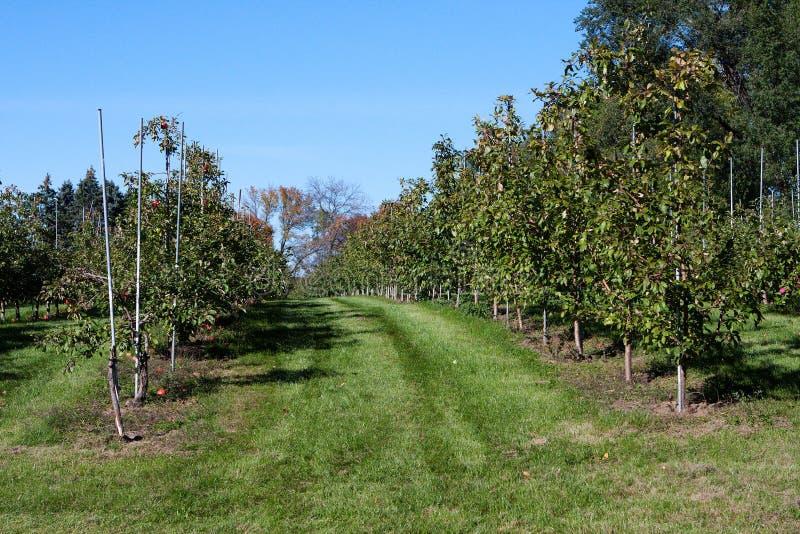 Apple-Obstgartenfeld voll der Äpfel stockfotos