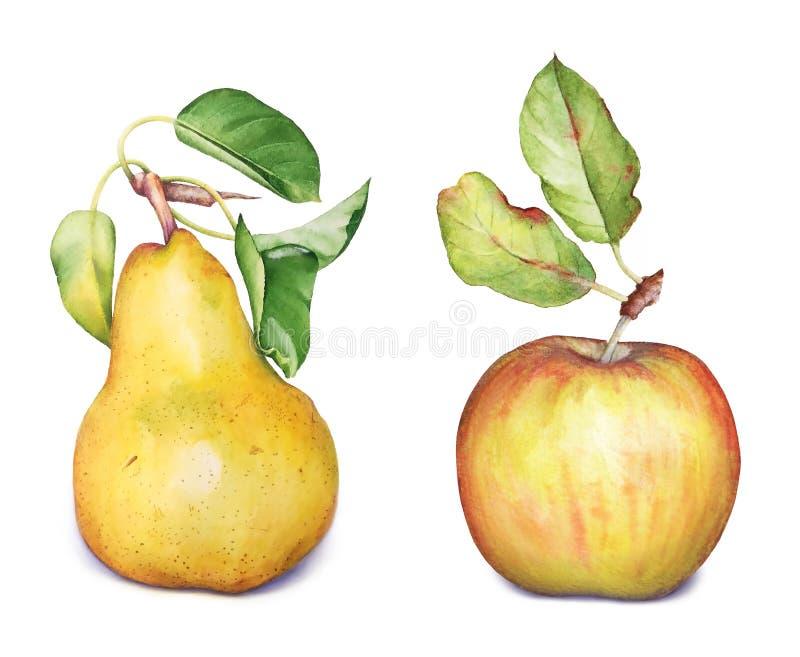 Apple och päronfrukter royaltyfria foton