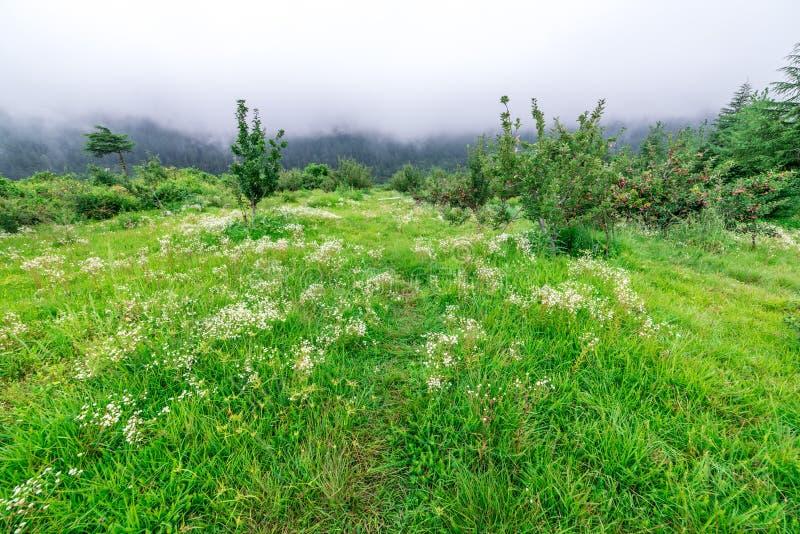 Apple ogródu natury tła deszczowy dzień Uprawiać ogródek i zbierać Spadek jabłczanych upraw organicznie naturalne owoc zdjęcia royalty free