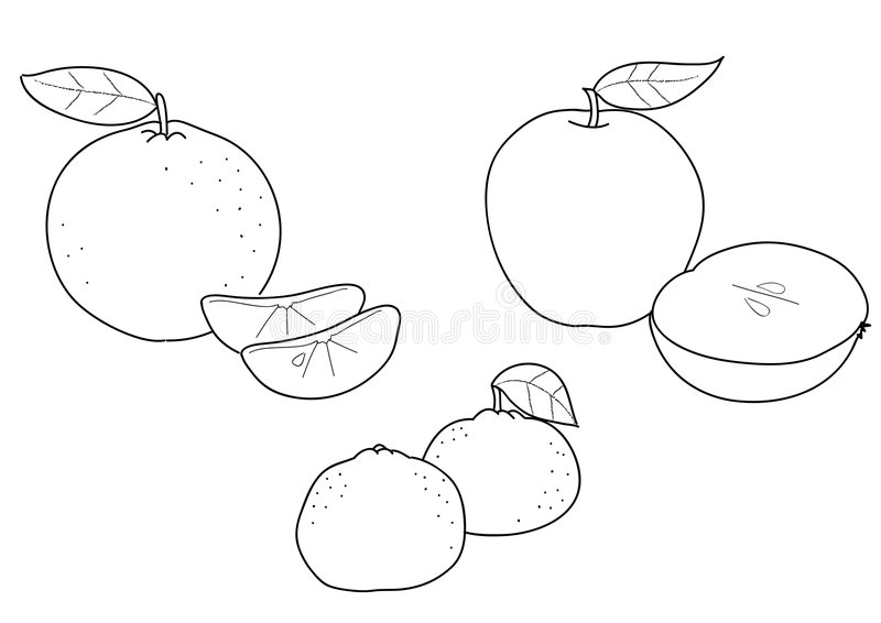 tangerine coloring pages | Apple Orange And Tangerine, BW Stock Vector - Illustration ...