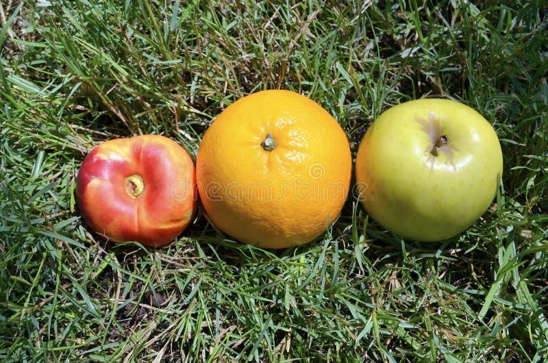 Apple, Orange und Pfirsich auf grünem Gras lizenzfreie stockbilder