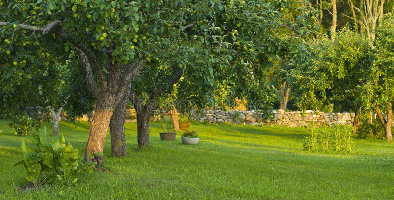 Download Apple Orchard Stock Image - Image: 10426381