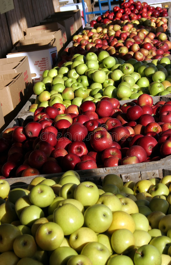 Apple Orchard. Apples in bins at an apple orchard stock images