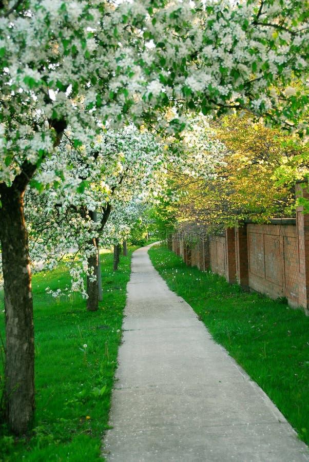 Free Apple Orchard Stock Image - 1631161