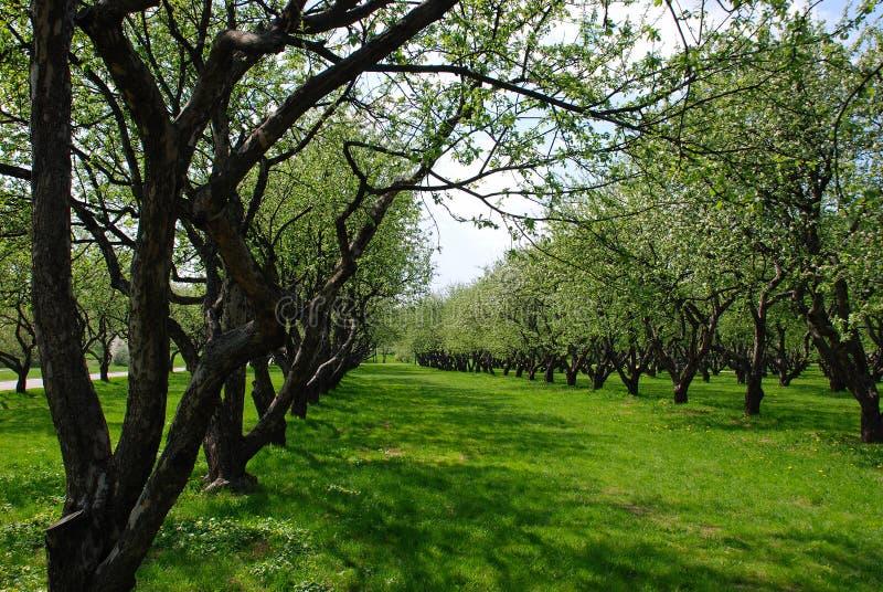 apple orchard 库存图片