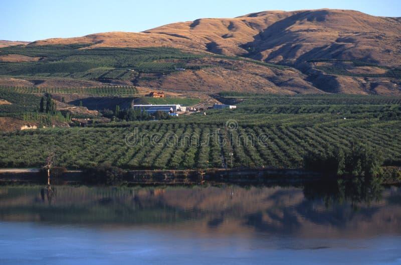 Apple Orchard, eastern Washington royalty free stock photo